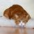 Your Cat's Inner Kitten Released