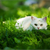 Photographing Your Elusive Feline