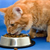 Does Your Cat Food Meet AAFCO Standards?