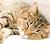 Do Cats Fake Sleep?