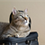 Air Travel for Cats