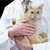 Allergic to Cats? New Vaccine Could Help