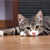 Can Cat Behavior Indicate Illness?