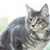 Cat Breeds for Dog Lovers
