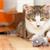Train Your Aggressive, Biting Kitten