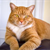 Top 5 Ways to Improve Life for Your Senior Cat