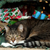 Is Water From a Christmas Tree Stand Harmful to Cats?