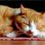 Cat Cancer Study Sheds Light on Human Cancer