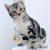 How to Toilet Train a Kitten