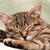 Cat Sleep Routines