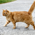 Do Cats Walk on Their Toes?