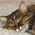 Do Bored Cats Sleep More?