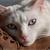 Weird Cat Behaviour, Explained