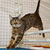 Cat Athletes With Summer Olympics Talents