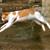 How Do Cats Jump?