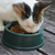 Special Food Choices for Your Senior Cat