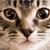 Facial Profiling of Cats