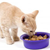 How to Select the Best Food for Your Kitten