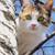 Ensure Curiosity Doesn�t Kill Your Cat