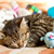 Determine Your Cat�s Toy Preferences