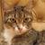 Misbehaving Cats Need Schooling
