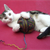 6 Ways to Keep Your Cat Healthy in 2012