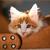 Your Cat�s Inner Kitten Released