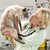 Improve Your Cat�s Visit to the Vet