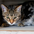 Five Ways To Make Your Shelter Cat Feel at Home