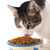The 5 Easiest Ways to Keep Your Cat Healthy