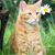 Homeopathic Remedies for Cats ... and are They Healthy?