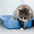 Having litter box issues? Here�s how to fix them.