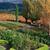 10 Steps to a Beautiful Fall Garden