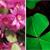 Go Green Indoors: Five Easy Houseplants to Grow