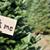 Christmas Trees 101