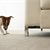 Anyone who has a dog or cat is familiar with the reality of pesky pet stains. Yuck, right? Well, love is unconditional -- even if your carpets might n