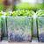 Tips on how to grow herbs indoors.