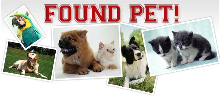 Found Pet
